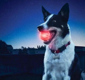 LED PET BALL